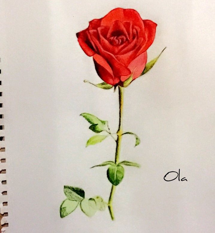 718x780 Rose Drawing , Red , Rose , Sketch , Colora , Flower , Painting