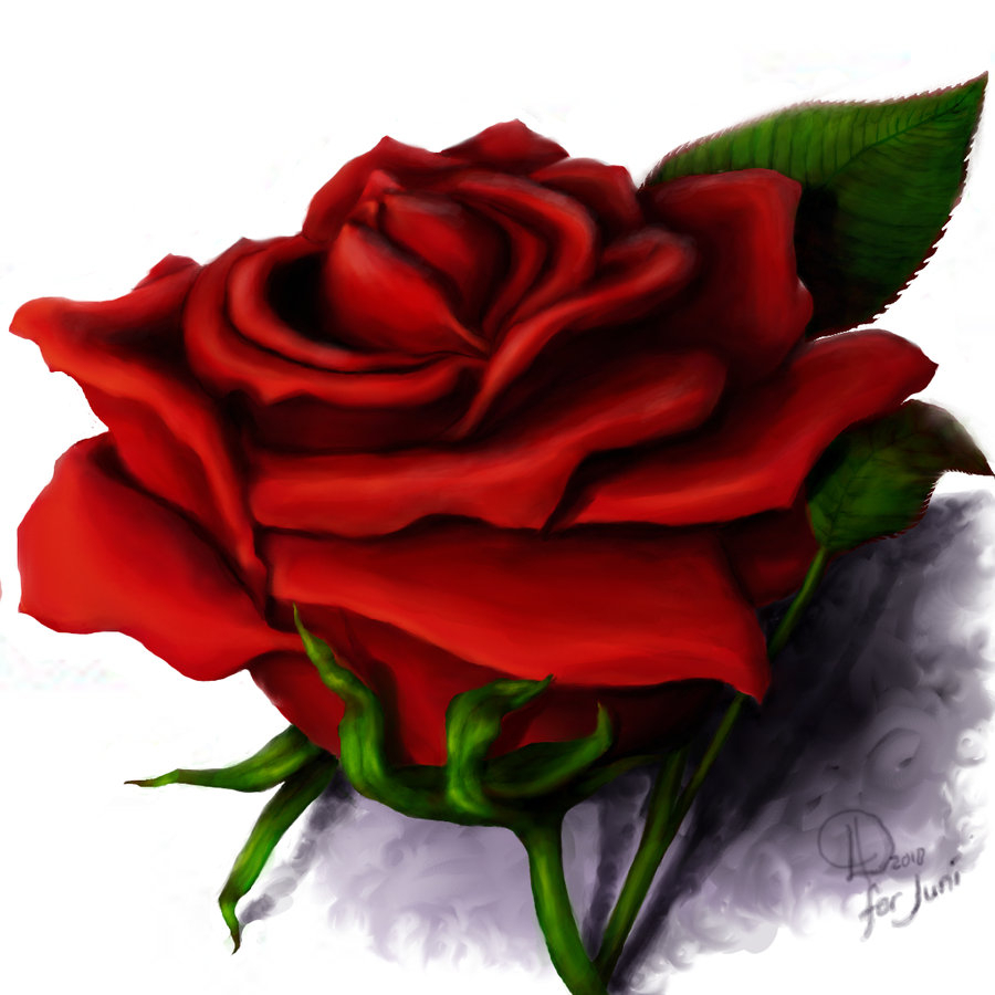 900x900 Single Red Rose Drawing Knumathise Realistic Red Rose Drawing