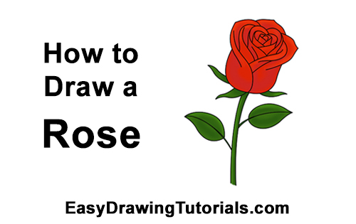 500x315 how to draw a rose