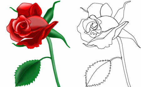 450x280 How To Draw A Rose Easy And Simple. How To Draw