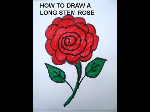 480x360 Learn To Draw For Kids, Draw A Long Stem Rose. Simple Drawing
