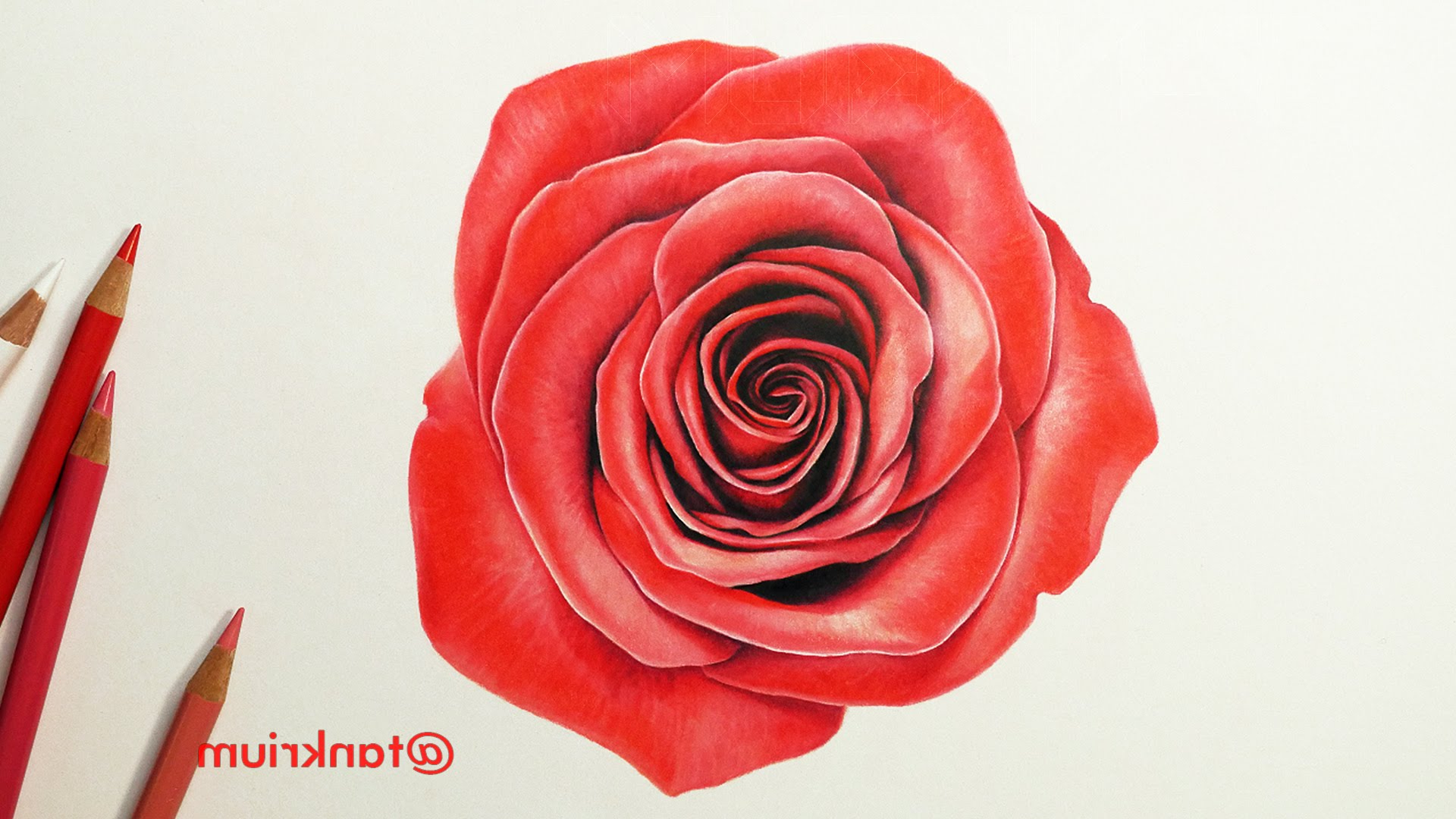 1920x1080 Colored Pencil Drawings Of Red Roses Drawing A Rose With Colored