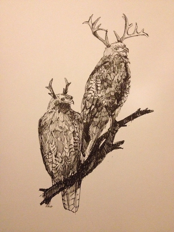 570x760 Antlered Red Tail Hawk Original Pen Drawing By Alexandraloesser