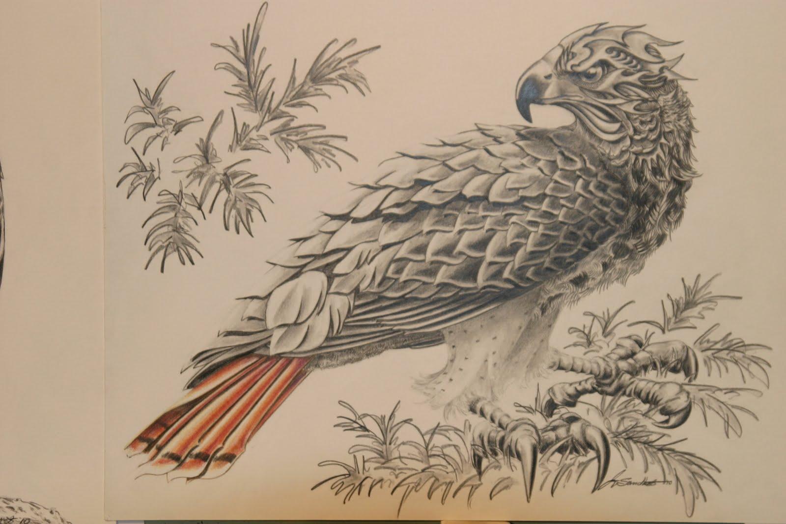1600x1067 Geoff Sandhurst, Artist, Calgary, Alberta Red Tailed Hawk Drawing