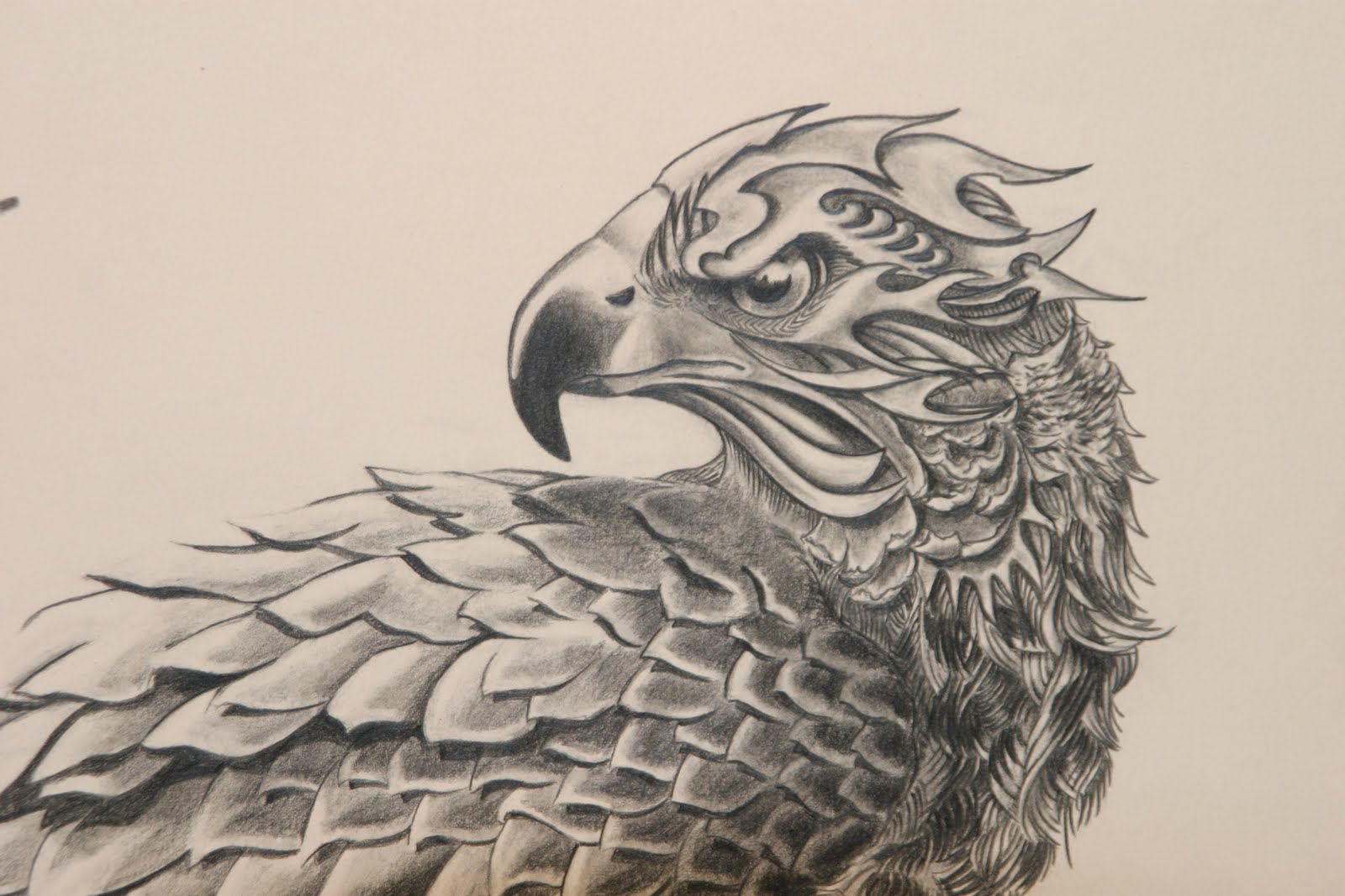 1600x1067 Red Tailed Hawk Drawing Red Tailed Hawk Animal Resources