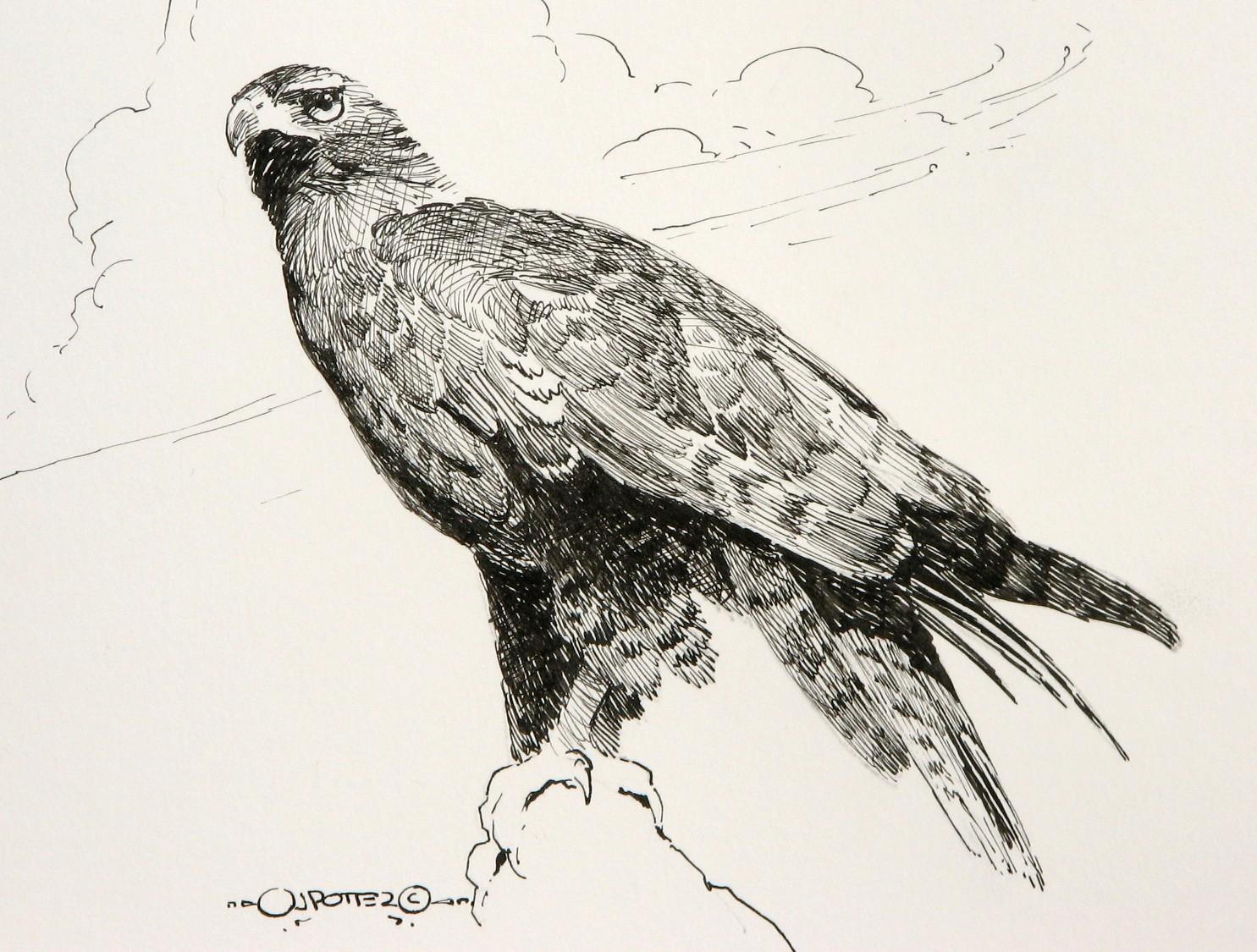 1485x1125 Redtail Hawk Graphite Art, Science