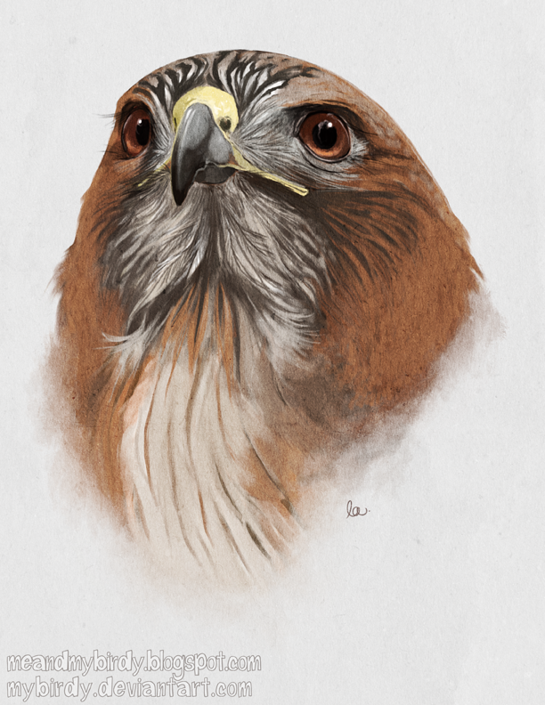 612x792 Red Tailed Hawk By Mybirdy On Colored Pencils