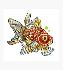 210x230 Redfish Drawing Photographic Prints Redbubble