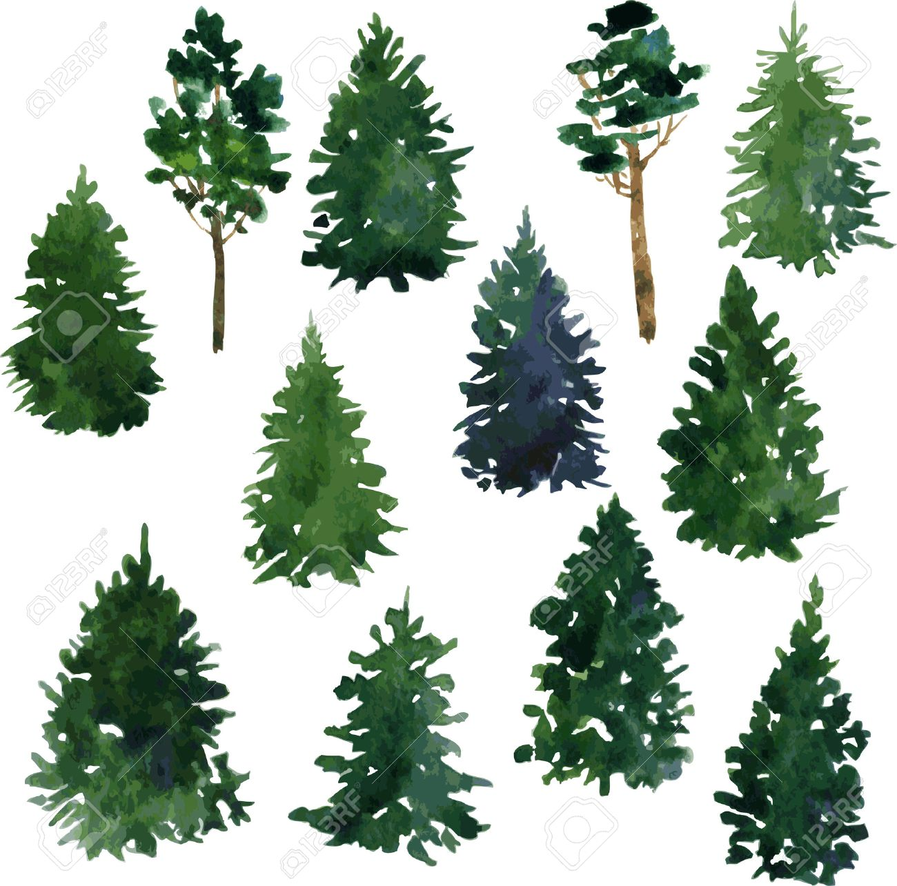 1300x1284 317 Redwood Tree Stock Illustrations, Cliparts And Royalty Free