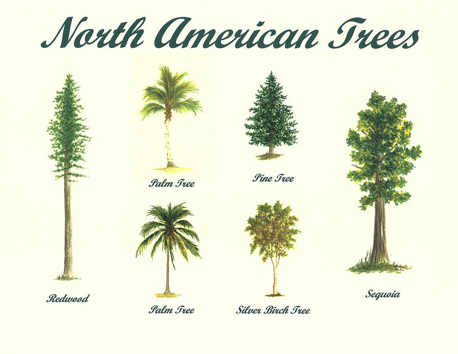 900x696 North American Trees Painting By Michael Vigliotti