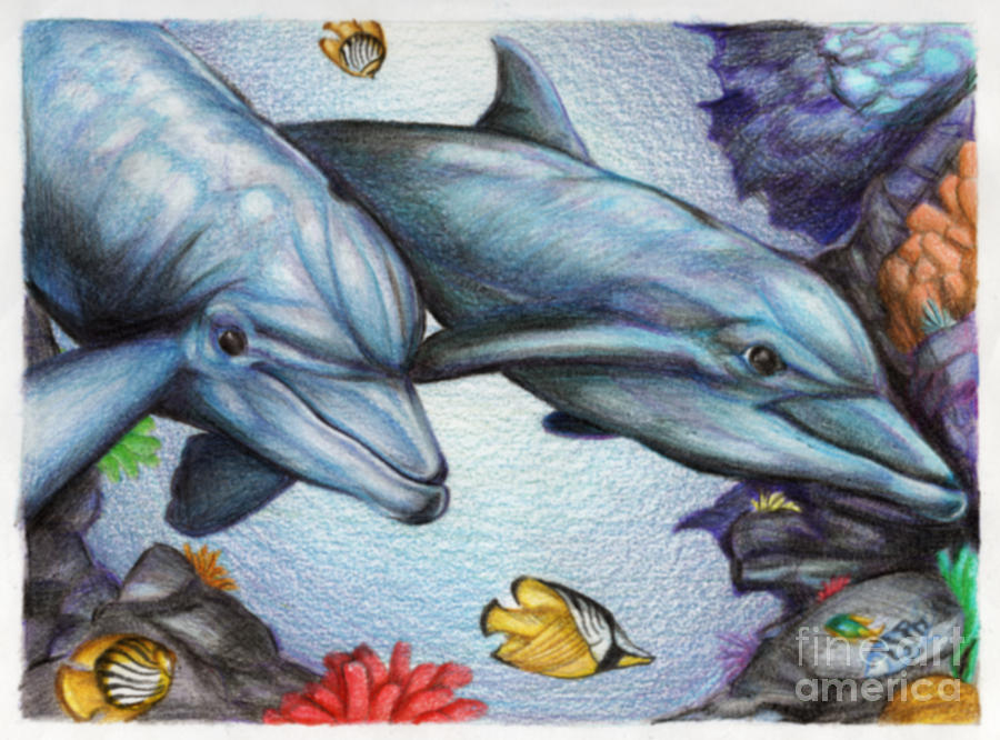 900x666 Dolphins In The Reef Drawing By Derrick Bruno Rathgeber