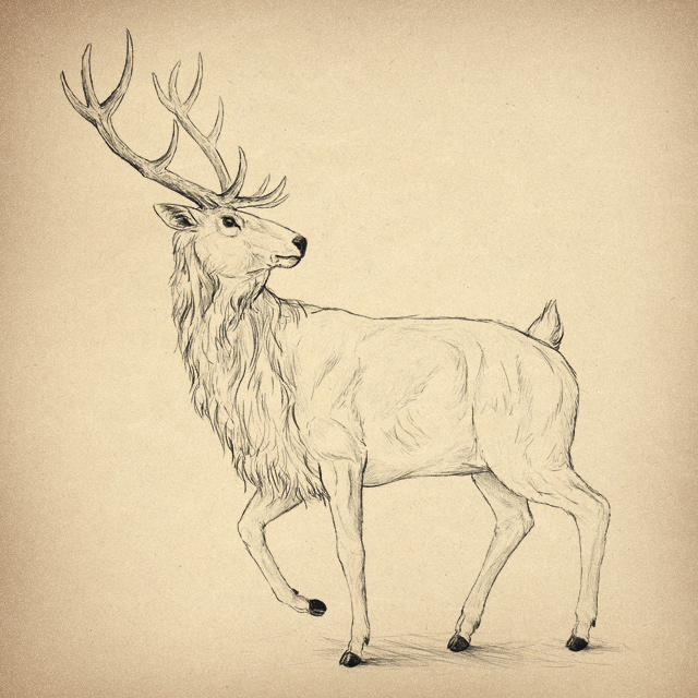 640x640 How To Draw Animals Deer