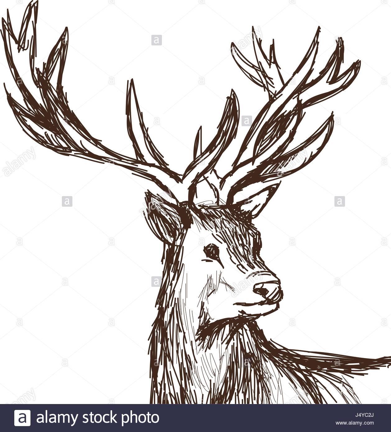 1258x1390 Hand Drawn Deer Big Antlers, Wildlife Poster. Face Graphic Sketch
