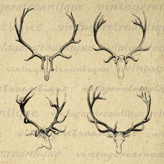 570x570 Real Reindeer Antlers