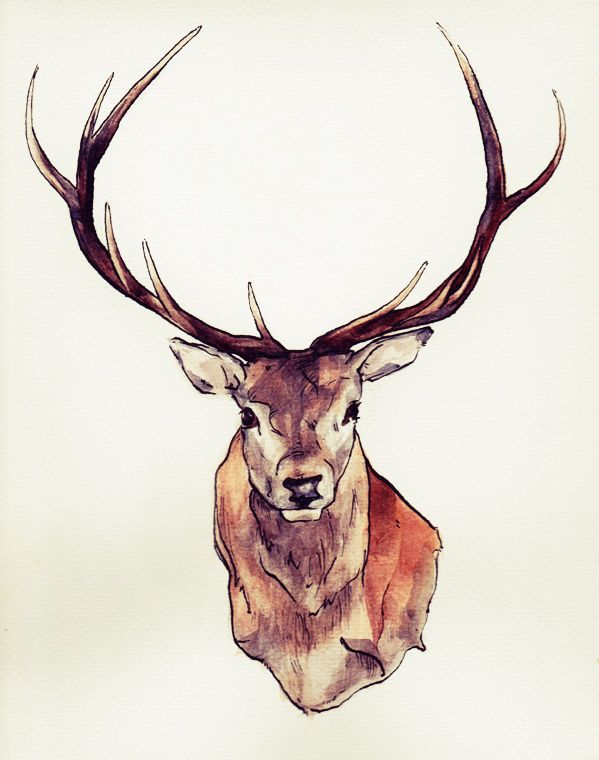 599x760 Stag Drawing Which One Is Better I'M Not So Sure Any More. They