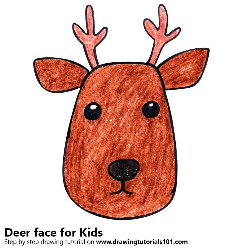 800x800 Learn How To Draw A Deer Face For Kids (Animal Faces For Kids