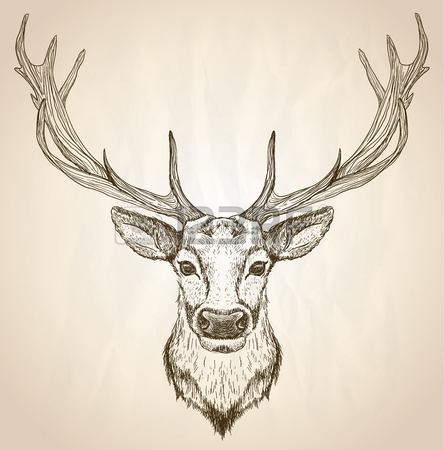 444x450 11,973 Deer Head Stock Illustrations, Cliparts And Royalty Free