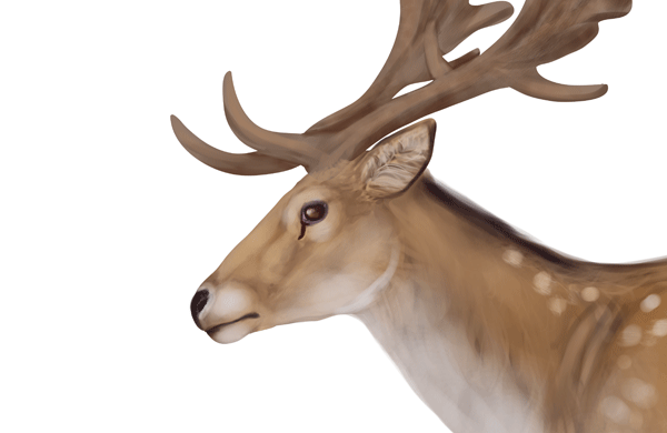 600x390 How To Draw Animals Deer