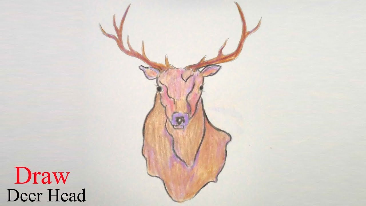 1280x720 How To Draw Deer Head Step By Step Very Easy