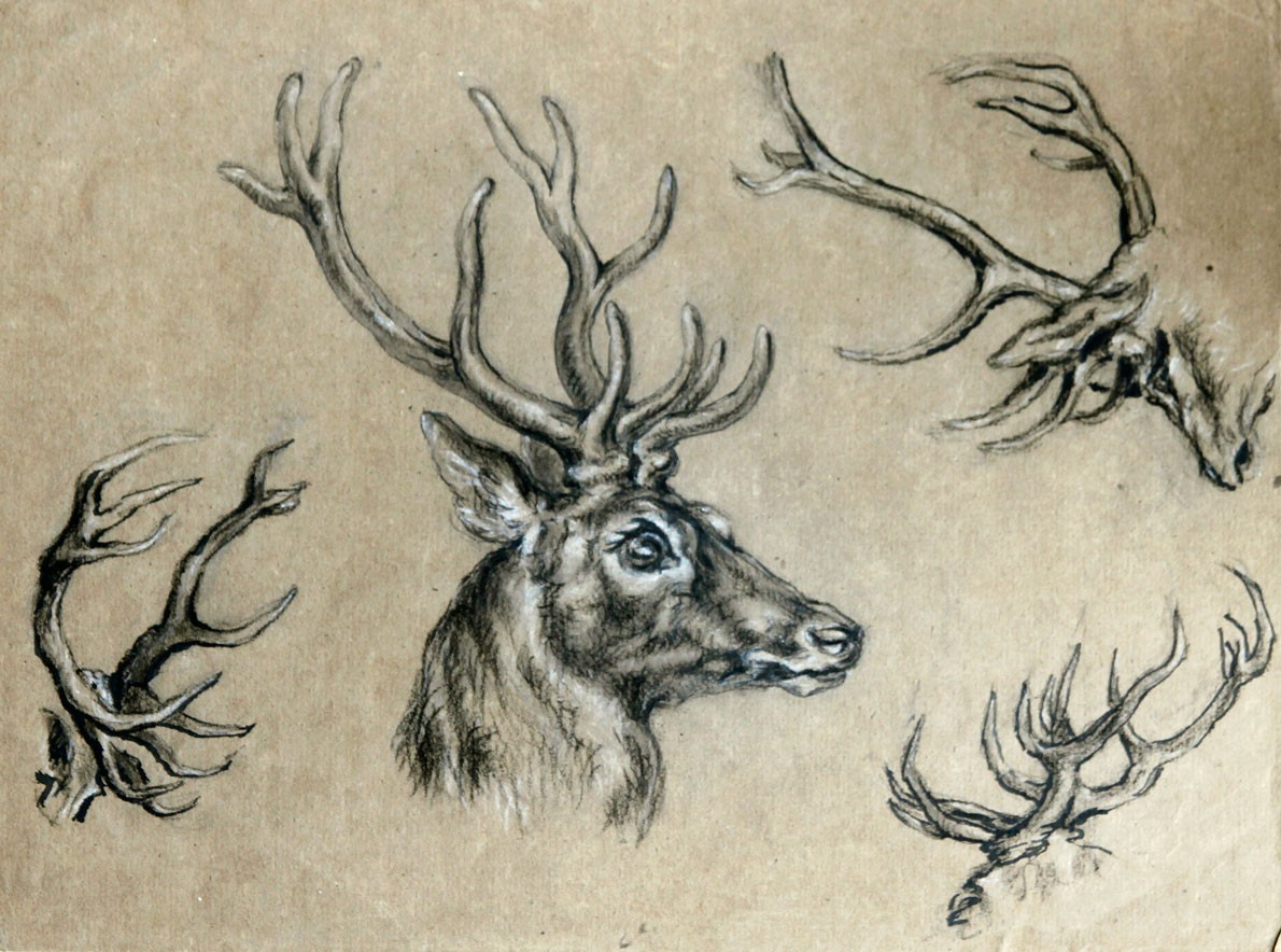 1190x884 Stag Head Drawing Stag Head Drawing Study Stags