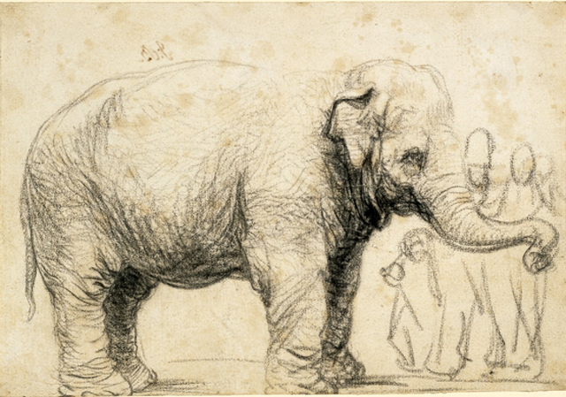 640x449 A Famed 17th Century Elephant Drawn By Rembrandt Is Revealed