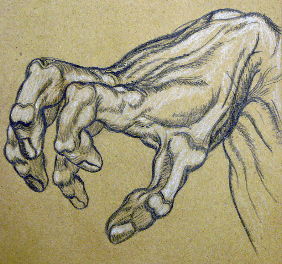 900x840 Renaissance Hand Drawing By Bear Welch
