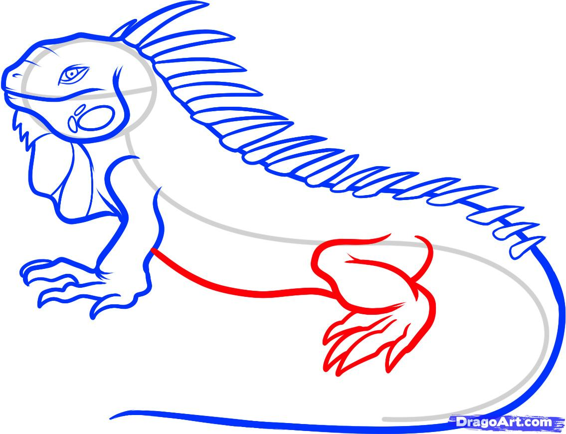 1135x870 How To Draw An Iguana, Step By Step, Reptiles, Animals, Free