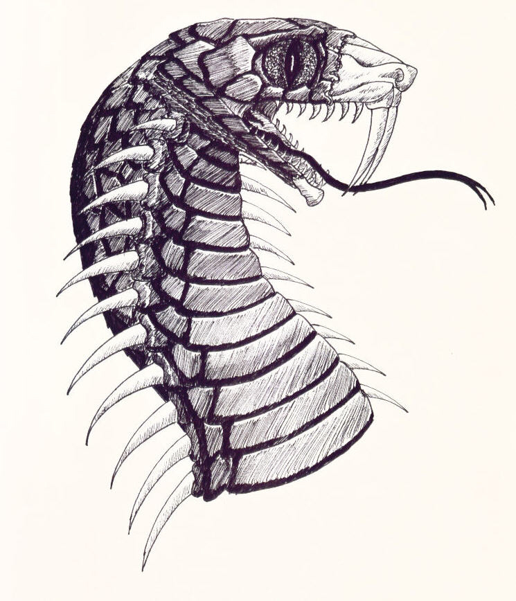 745x868 Some Reptile Drawings