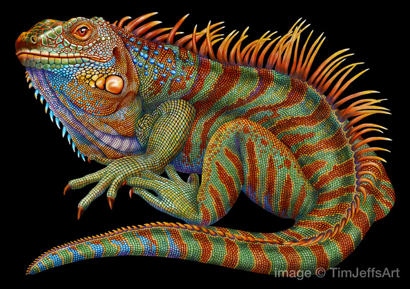 800x565 Tim Jeffs Draws Incredibly Detailed Lizards Using Pencil Crayons