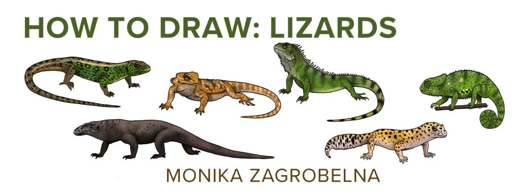1024x386 How To Draw Lizards (Aka Real Life Dragons)