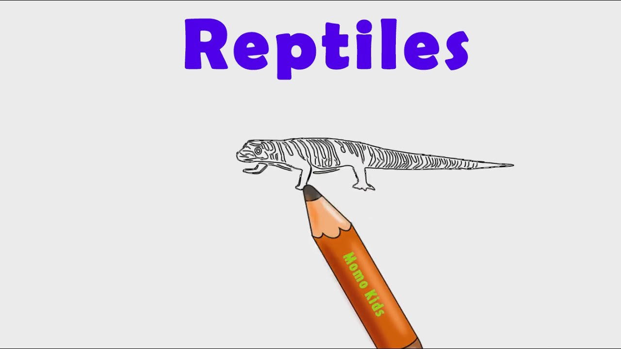 1280x720 Reptiles Drawing For Kids Learning Reptiles Names Animal