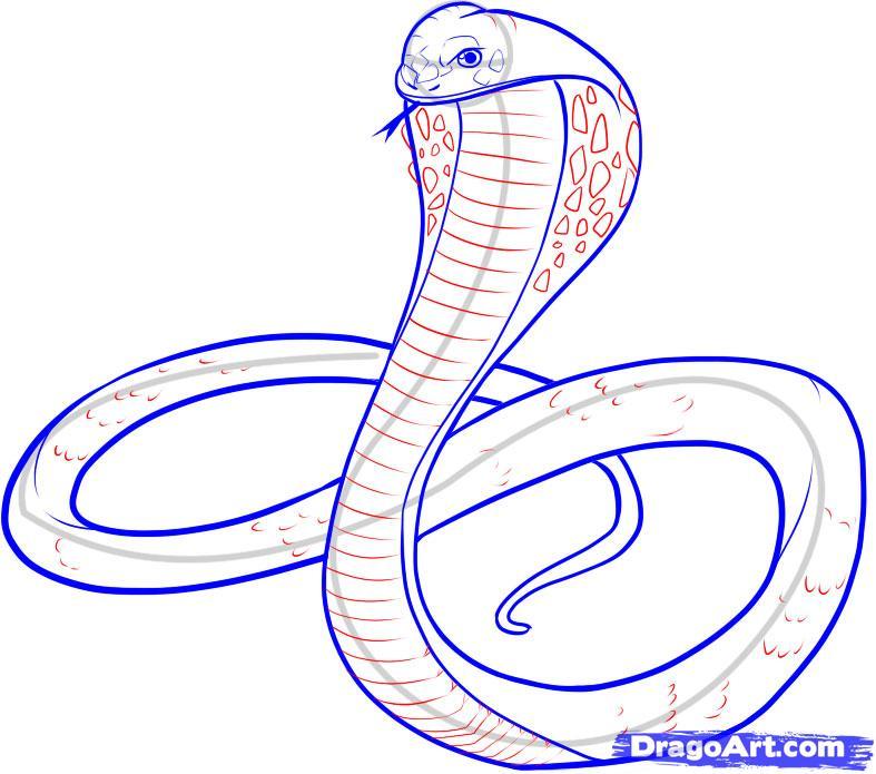 787x695 Cobra Drawings
