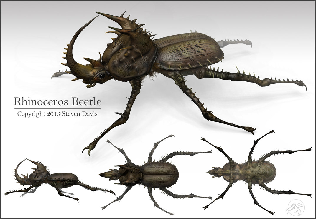 Rhino Beetle Drawing at GetDrawings.com | Free for personal use ...