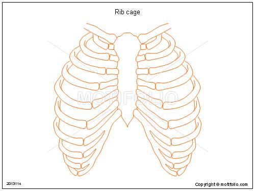 500x375 Rib Cage Illustrations