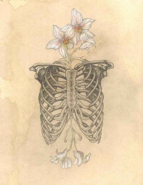 500x646 Drawing Flowers Human Skeleton Bones Anatomy Figure Rib Cage