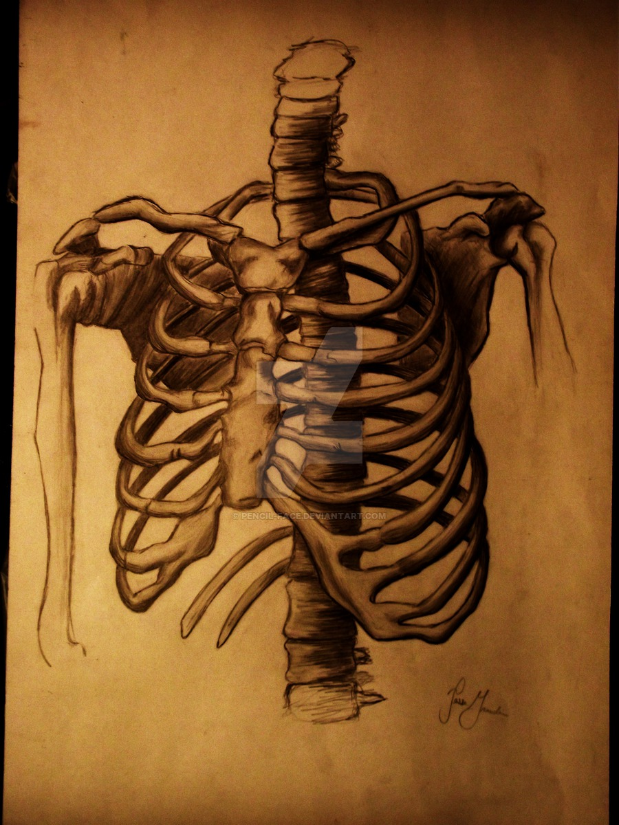 900x1200 Rib Cage By Pencil Face