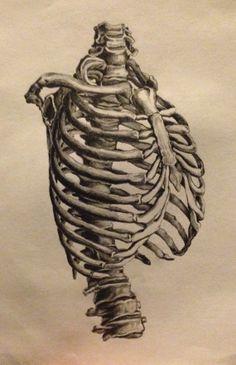 236x365 Rib Cage Drawing Inspiration. Rib Cage, Anatomy