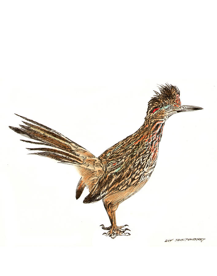 707x900 Roadrunner Drawings Fine Art America