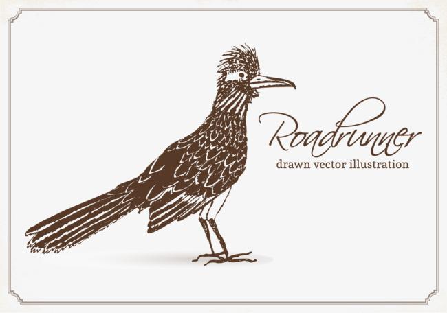 650x456 Roadrunner Vector Illustration, Roadrunner, Birds, Vector Png