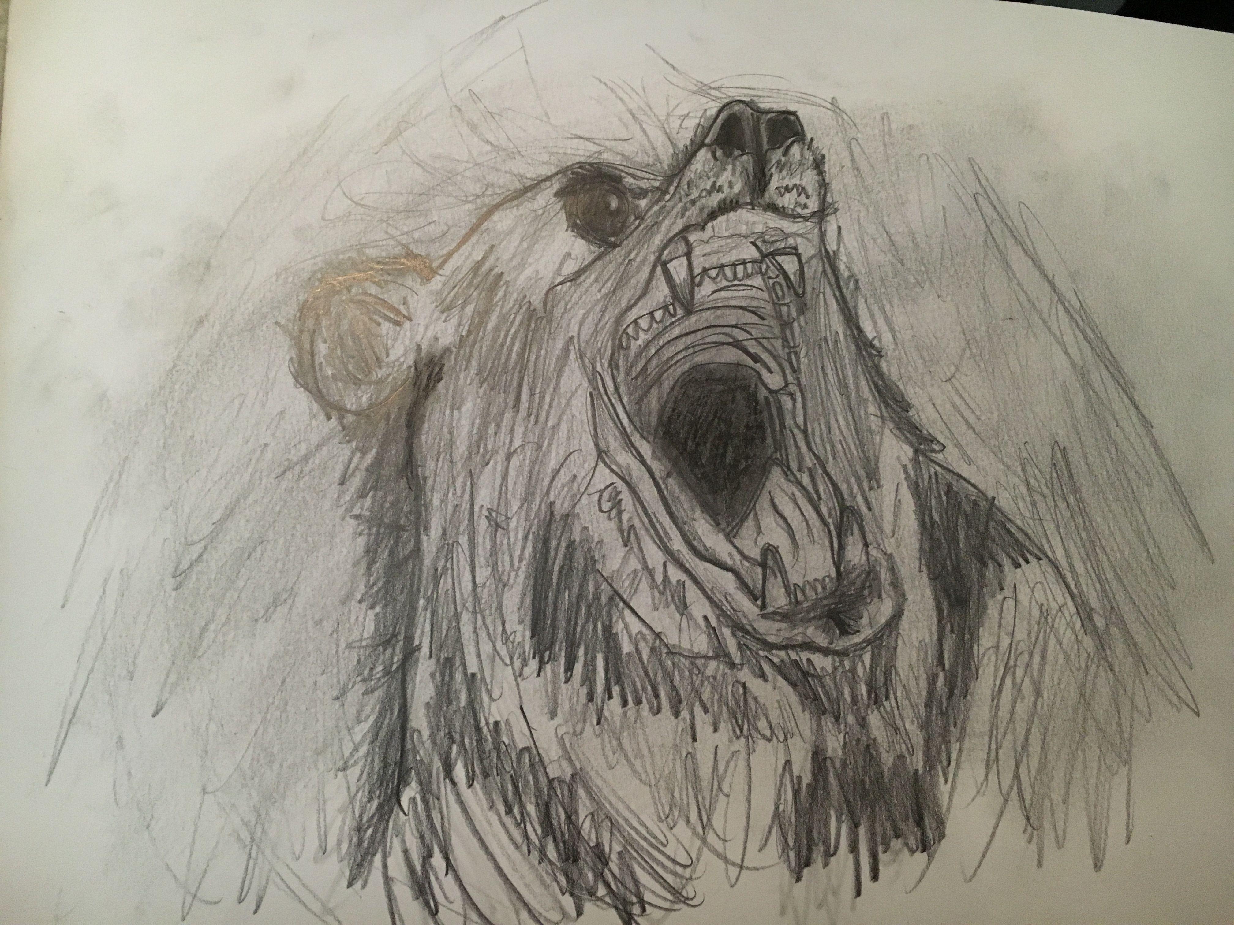 4032x3024 Roaring Bear I Drew W Charcoal Set My Drawings I'Ve Done