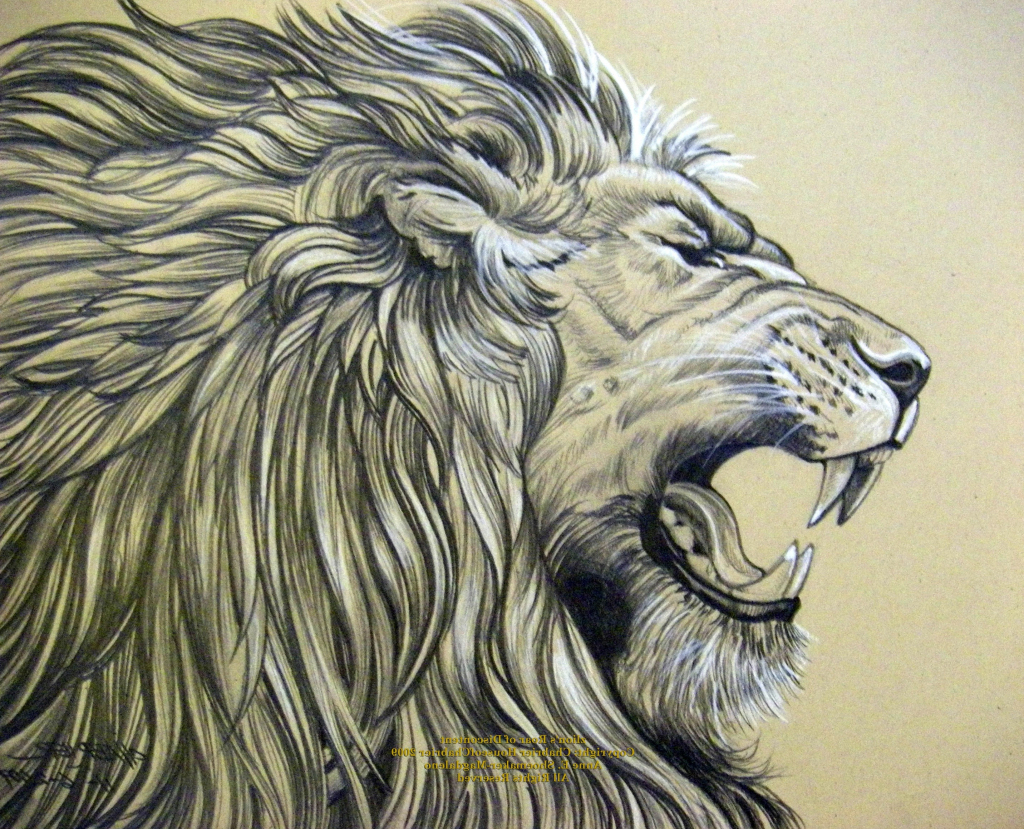 1024x829 Pencil Sketch Of Roaring Lion Realistic Lion Drawing Pencil