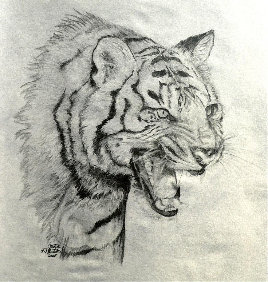872x917 How To Draw A Roaring Tiger Drawn Tiger Tiger Roar