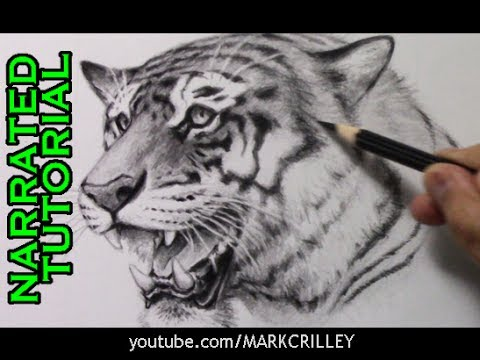 480x360 How To Draw A Tiger [Narrated Step By Step Tutorial]