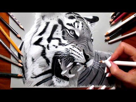 480x360 Pencil Drawing Roaring Tiger