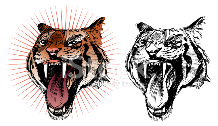 758x440 Roaring Tiger Sketch, In Colour And Black Amp White Stock Vector