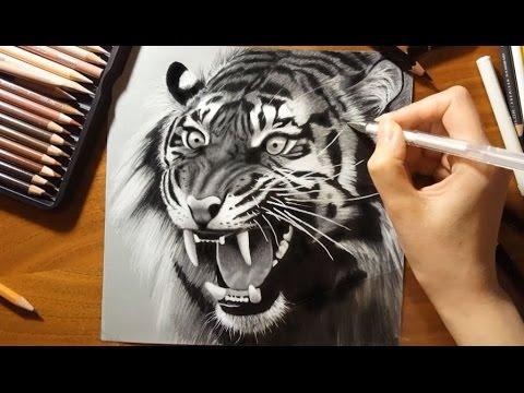 480x360 Speed Drawing A Roaring Tiger Jasmina Susak