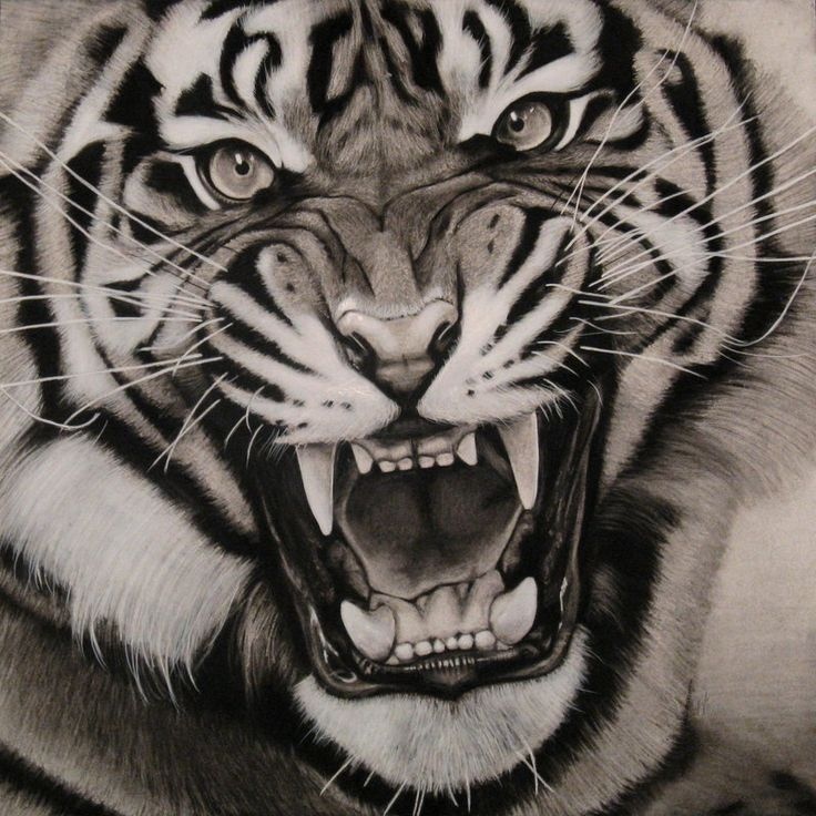 736x736 The Roar Tiger Painting Tat's Tiger Painting
