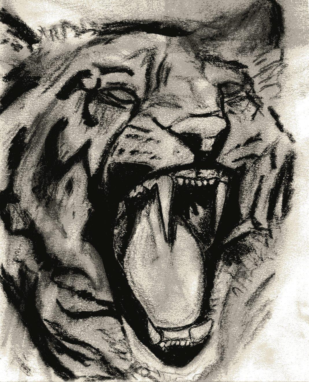 1069x1322 Tiger Drawing Artmkc