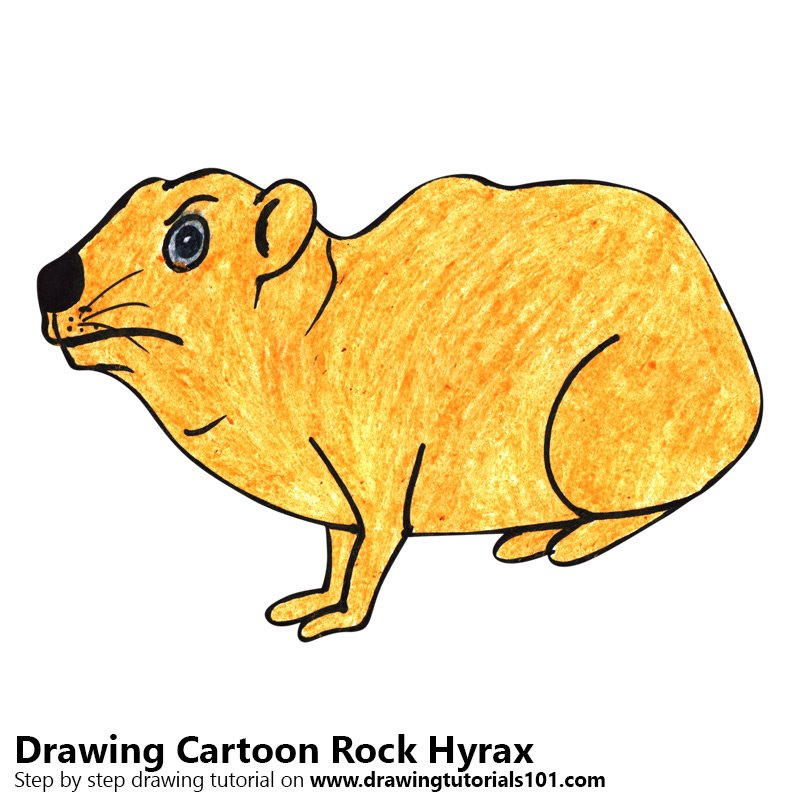 800x800 Learn How To Draw A Cartoon Rock Hyrax (Cartoon Animals) Step By