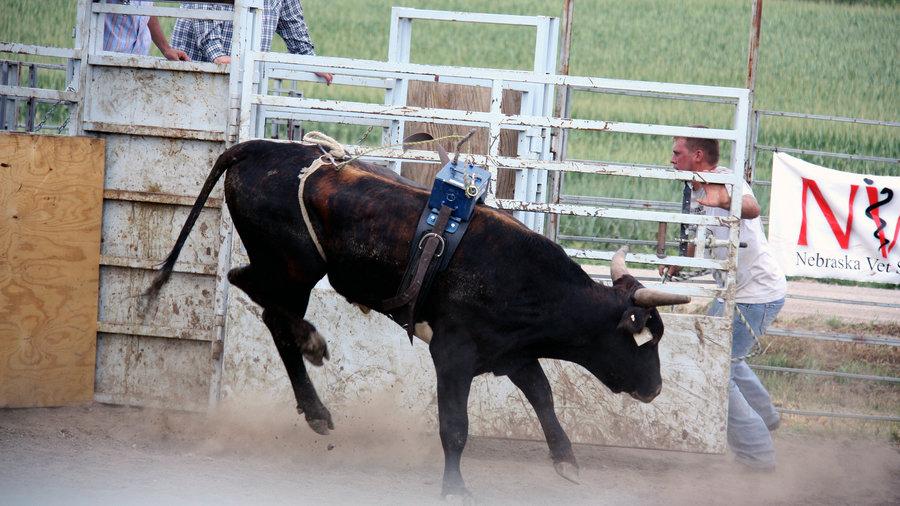 900x506 Bucking Bulls Draw Crowds, And Dollars Npr